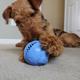 Monster Ball Dog Toy Medium