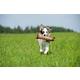 MajorDog Bottle Cat Dog Toy