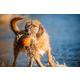 MajorDog Swimming Eddy Dog Toy