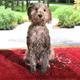 Dog Gone Smart Dirty Dog Doormat LG Maroon