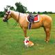 Shires Holiday Saddle Pad