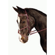 Kincade Figure Eight Bridle Pony