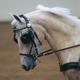 Ozark Miller V Carriage Mini/Pony Harness