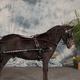Mini/Pony Show Caveson/Browband Set