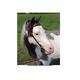 Ozark Western Leather Mini/Pony Bridle