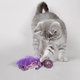 KONG Squeezz Confetti Cat Toy