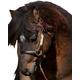 Ozark Personalized Mini/Pony Leather Halter