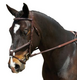 Collegiate Comfort Crown Figure 8 Bridle Warm