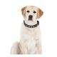 Halo Snowflake Leather Dog Collar