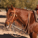 Al Dunning by Pro Choice Martingale w/Single Rein