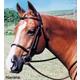 Tory Leather Square Raised Bridle Horse Oakbark