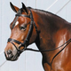 Tory Leather Deluxe Dressage Bridle Horse