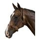 Collegiate Rolled Edge Leather Halter Pony