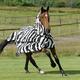 Bucas Zebra Fly Sheet