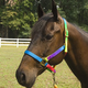 Deluxe Rainbow Nylon Halter Large