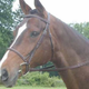 Collegiate Square Raised Bridle Horse Brown