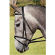 Collegiate Padded Bridle w/Flash Black Cob