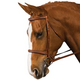 Collegiate Padded Fancy Bridle Cob Brown