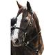 Mustang Western Poly Tack Set Pink