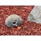 Real Rock Key Hiding Stone