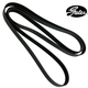 1AESB00058-Serpentine Belt