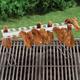 Wing Rack