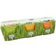 3 Pack Mini Organic Cat Grass Grow Kits