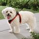 Mesh Dog Harness With Leash