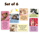 Kitten Magnets - Set Of 6