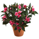 Artificial Impatiens Bush