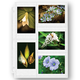 Double Weight 3.5 x 5 Photo Pocket Pages - Set Of 10, 3.5