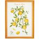 Italian Orange Tree Towel