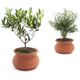 Washpot Set of Two—Rosemary and Olive Tree
