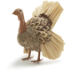 Decorative Turkey, Tan
