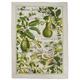 Avocado Print Kitchen Towel