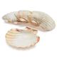 Sur La Table King Scallop Grilling Shells, Set of 4