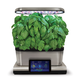 AeroGarden Pesto Basil Seed Pods, Set of 6