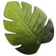 Palm Placemat