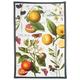 Botanical Citrus Kitchen Towel, 30