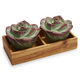 Succulent Salt and Pepper Shakers