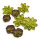 Succulent Scatter, Set of 8
