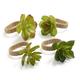 Succulent Napkin Ring, Set of 4