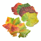 Parchment Paper Cheese Fall Leaves, Pack of 20