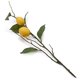 Decorative Lemon Branch