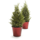Holiday Rosemary Topiary Cone, Set of 2, 4¼