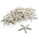 Decorative Starfish Scatter