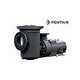 Pentair EQ500 Series 5HP Nema Premium Efficiency Single Phase Commercial Pool Pump with Strainer 230V | 340030