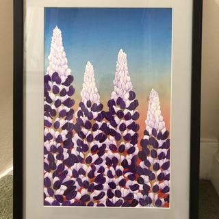 Spring California Lupine