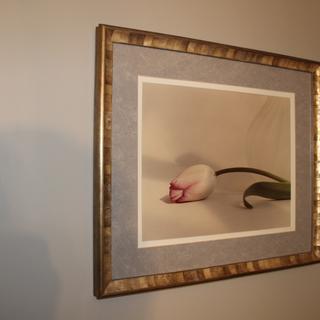 Tulip by Jill Bedford (WI)