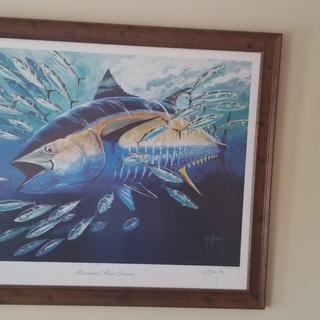 Guy Harvey originals...frames are beautiful